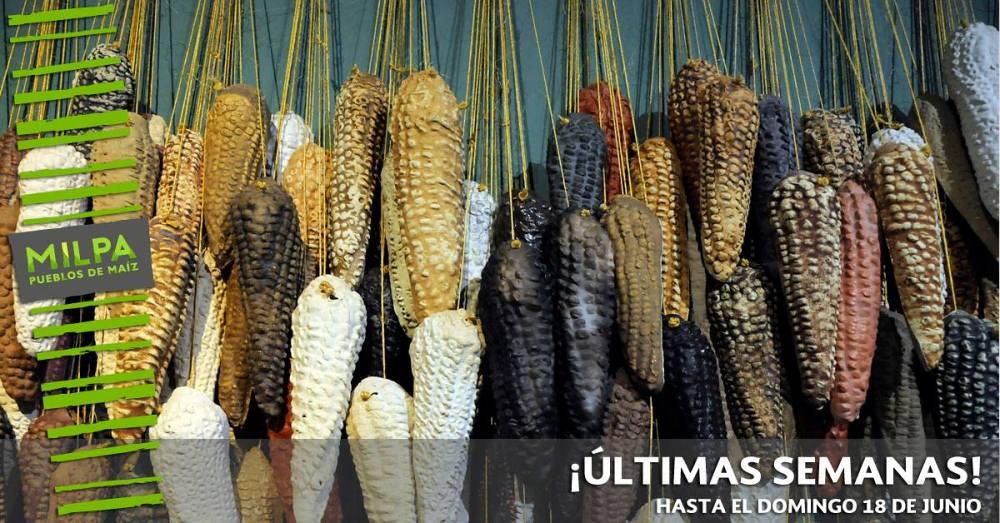 La Milpa. Pueblos de maíz