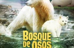 Bosque de osos. Tierra del Oso Espíritu