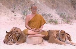 The Tiger and the Monk