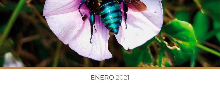 Conociendo las abejas de México