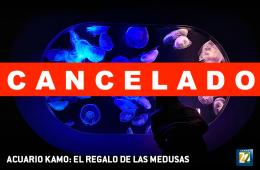 Acuario Kamo: el regalo de las medusas