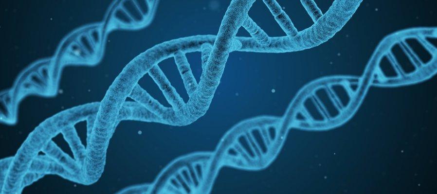 Conoce tu propio ADN