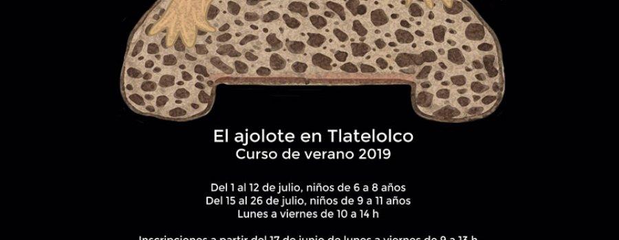 Axólotl in Xaltilolli. El ajolote en Tlatelolco