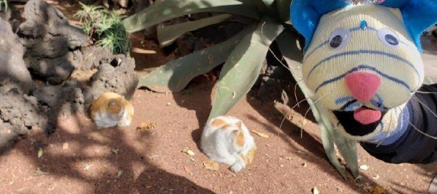 Historias por contar: Los derechos de los animales por los gatos de Palacio