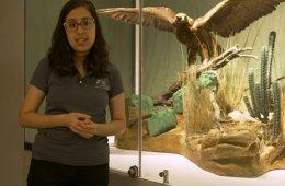 Museo de las Aves. Recorrido