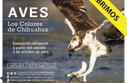 Aves: Los colores de Chihuahua