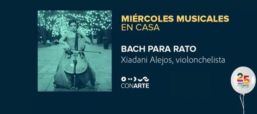 Concierto Bach para rato