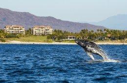 Las culturas de occidente y las ballenas jorobadas. Jalis...