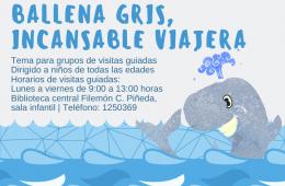 La ballena gris, incansable viajera
