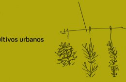 Manual: Cultivos urbanos