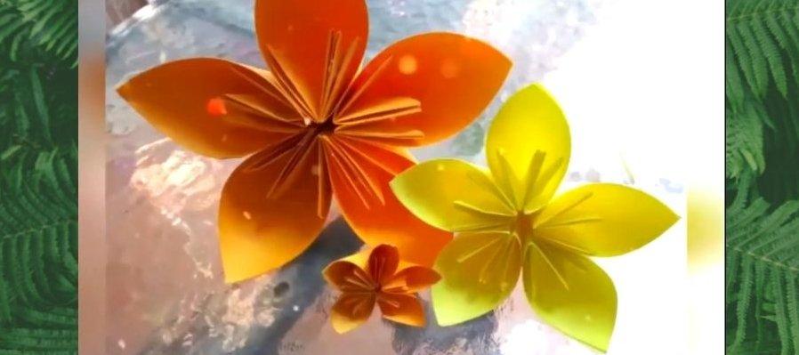 Dippy Tv Taller de Flores