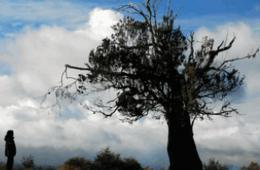 El cielo, la tierra y la lluvia