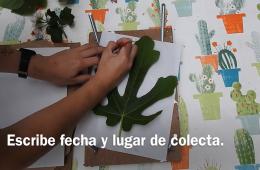 Impresión botánica sobre papel