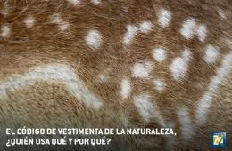 El código de vestimenta de la naturaleza¿quién usa qu�...
