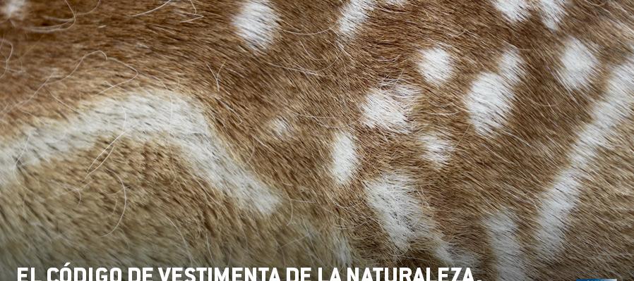 El código de vestimenta de la naturaleza¿quién usa qué y por qué?