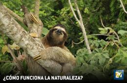Cómo funciona la naturaleza