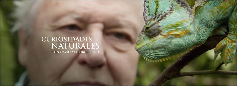 Curiosidades naturales de David Attenborough
