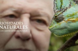 Curiosidades naturales de David Attenborough