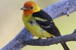 Aves del estado de Chihuahua