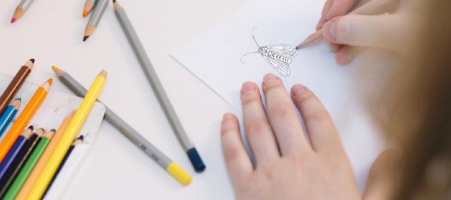 Curso Básico de Ilustración de Organismos Pequeños