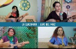 Guacamaya | Jijas del maíz
