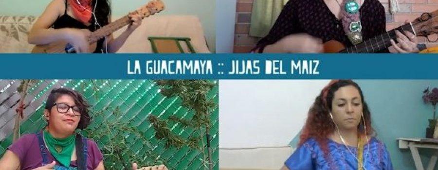 Guacamaya   Jijas del maíz