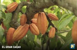 El gran cacao