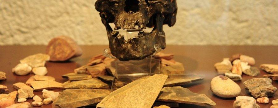 Exhiben la reproducción del cráneo fósil del Hombre de Chimalhuacán