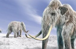 Sobrevivientes de la Era Glacial