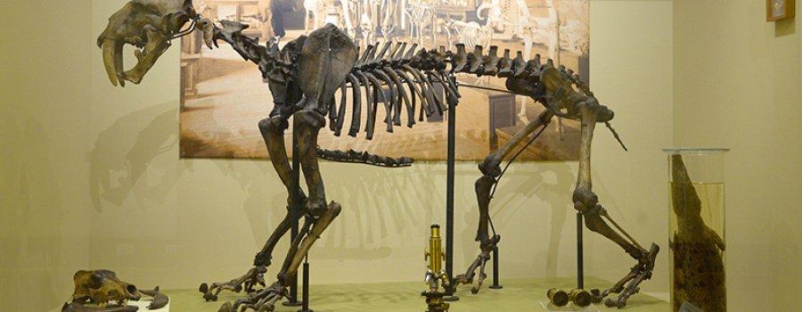 150 años de Historia Natural en México