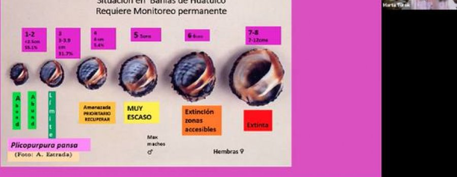 El caracol púrpura