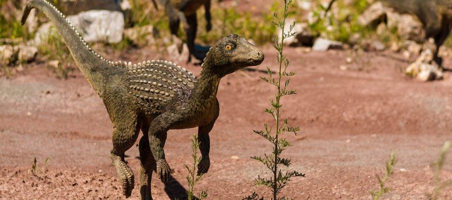 Evolución y paleontología