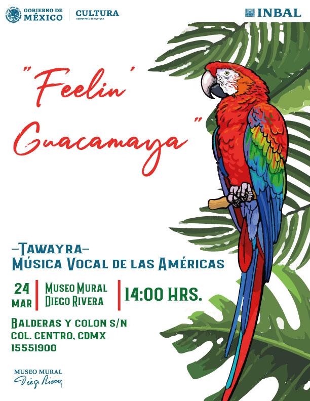 Concierto Feelin Guacamaya