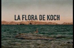 Taller fotográfico: la flora de Koch. Parte 1