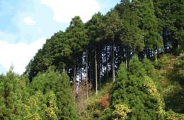 Foresta mexicana. El legado del bosque