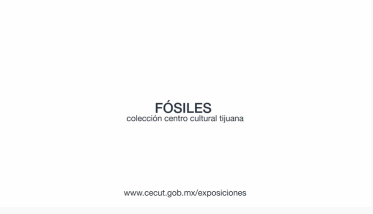 Colección paleontológica del CECUT