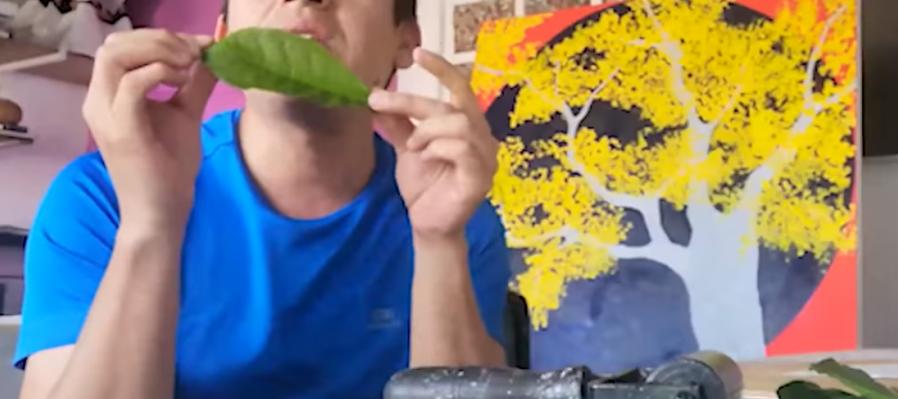 Ronda infantil: grabado con hojas