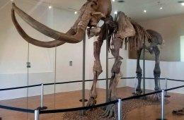 Mamut de Ecatepec: el gigante de la prehistoria