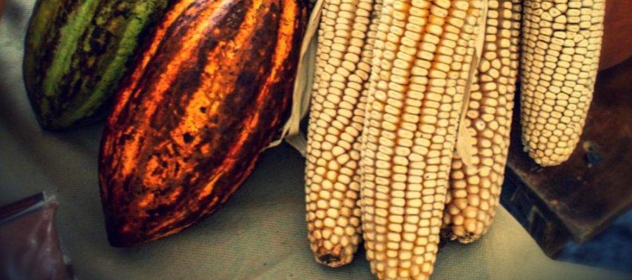Festival Artesanal de cacao y maíz