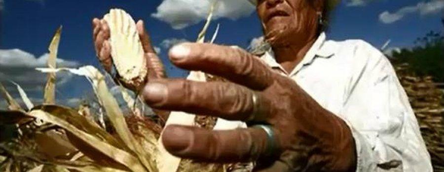 Conoce el proyecto de la milpa sustentable