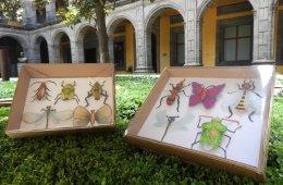Insectívoros responsables | Visitas escolares