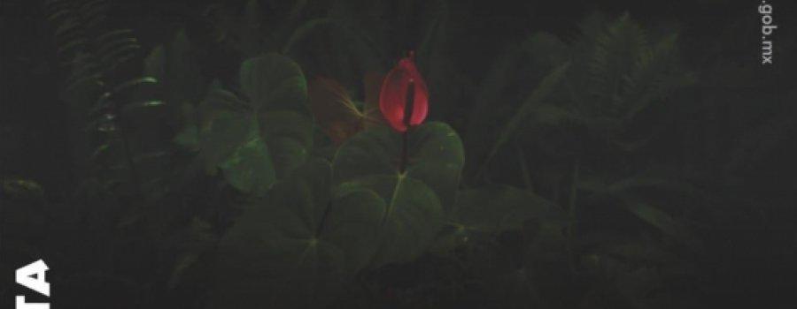 Íntima luz. Siete Fotógrafas Contemporáneas en Chiapas