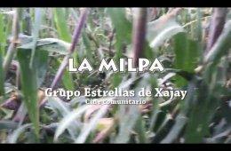 El maíz y la milpa tradicional