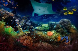 El último arrecife en 3D