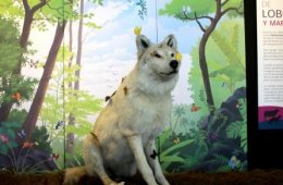 Pieza del mes: De lobos y mariposas.
