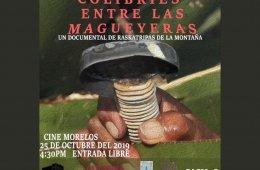 Colibríes entre las Magueyeras