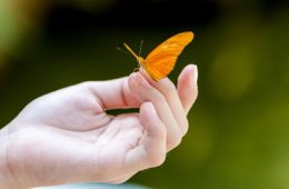 Niños y las Mariposas