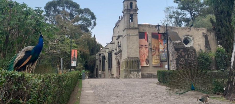 Recorre el Museo Dolores Olmedo en este paseo virtual