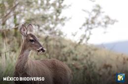 México biodiverso