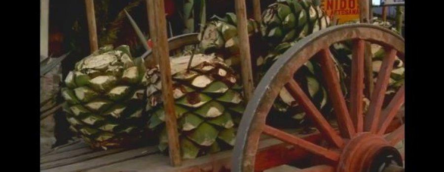 El Mezcal (Documental - INAH)